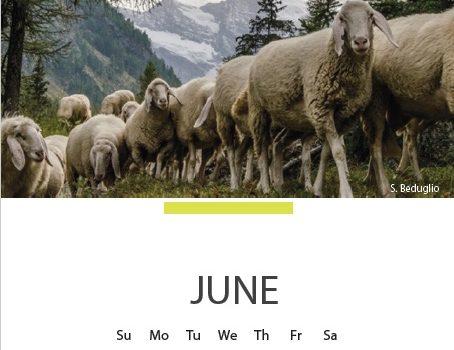 Calendario 2017 degli Amici della Lana