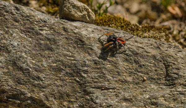 Roppolo – Close Up su insetti e aracnidi