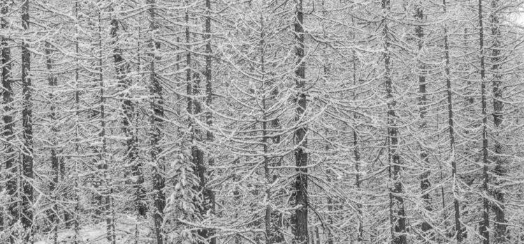 Val di Rhemes, 2 dicembre 2017: nevicata in B/N