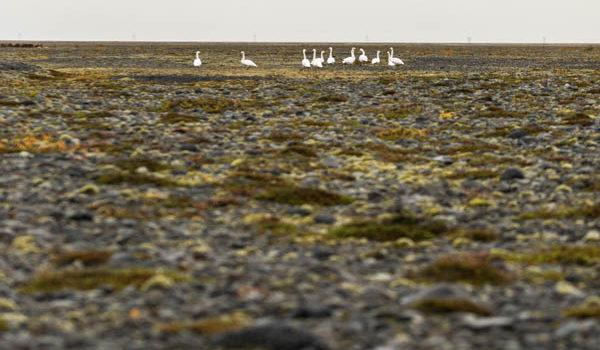 Islanda Sud in autunno – capitolo terzo (ali)